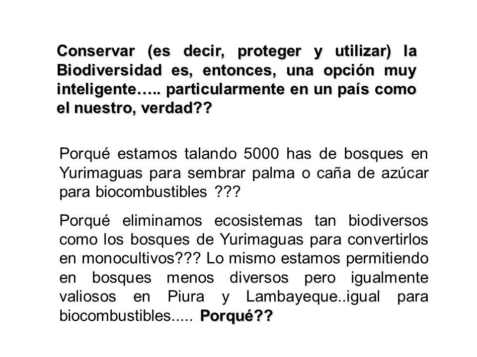 Conservar (es decir, proteger y utilizar) la Biodiversidad es, entonces, una opción muy inteligente….. particularmente en un país como el nuestro, ver