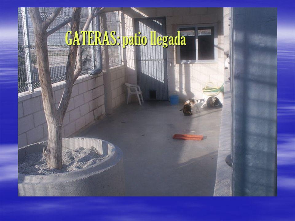 GATERAS: patio llegada