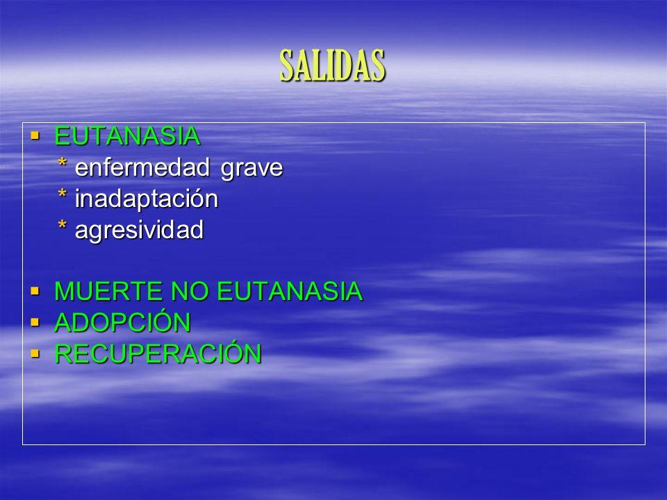 SALIDAS EUTANASIA EUTANASIA * enfermedad grave * enfermedad grave * inadaptación * inadaptación * agresividad * agresividad MUERTE NO EUTANASIA MUERTE