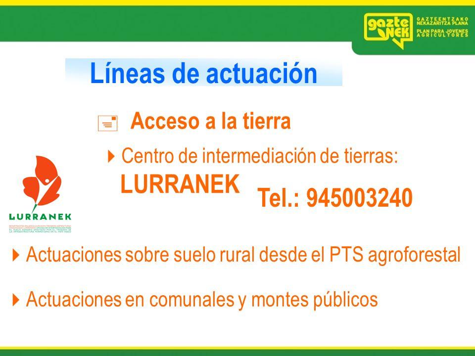 Líneas de actuación Acceso a la tierra Actuaciones sobre suelo rural desde el PTS agroforestal Centro de intermediación de tierras: LURRANEK Actuacion