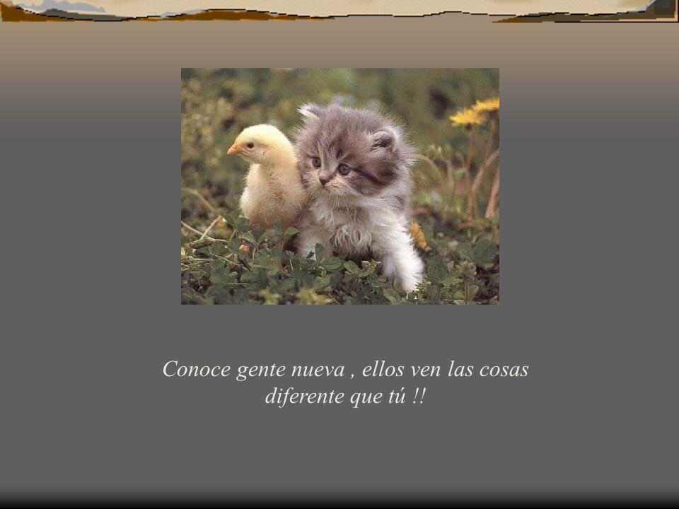 Conoce gente nueva, ellos ven las cosas diferente que tú !!