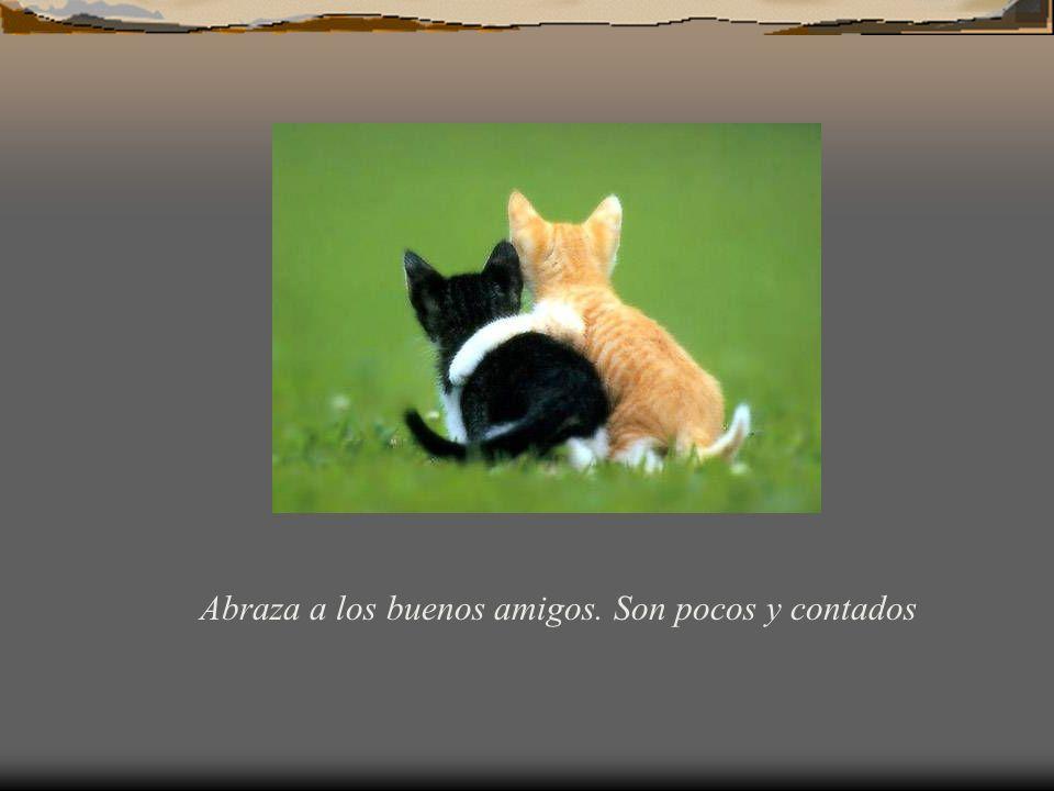 Ama a tus amigo sin importar quiénes son ellos.