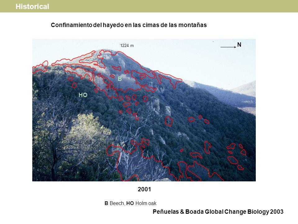 Sea breezes MONTSENY MOUNTAINS Beech forest distribution Turó de lhome Les Agudes Matagalls Navall Historical Peñuelas & Boada Global Change Biology 2003