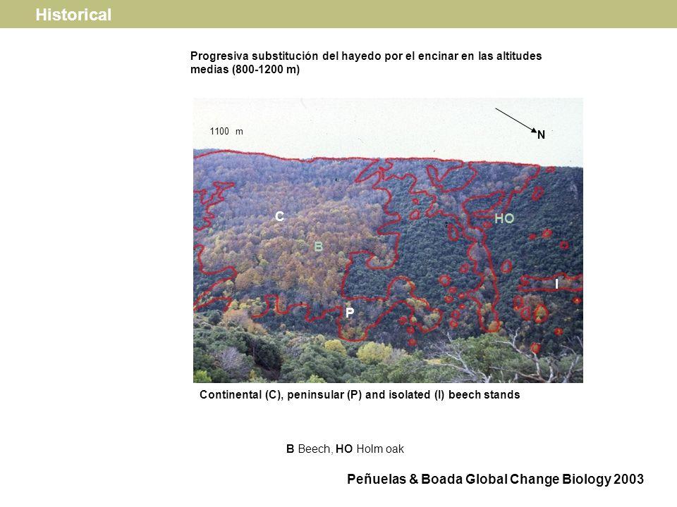 Continental standsIsolated stands Holm oak recruitment (saplings per plot) 3 6 9 12 * 2 4 6 8 Beech recruitment (saplings per plot) 1 2 3 Beech defoliation status * * Historical Peñuelas & Boada Global Change Biology 2003