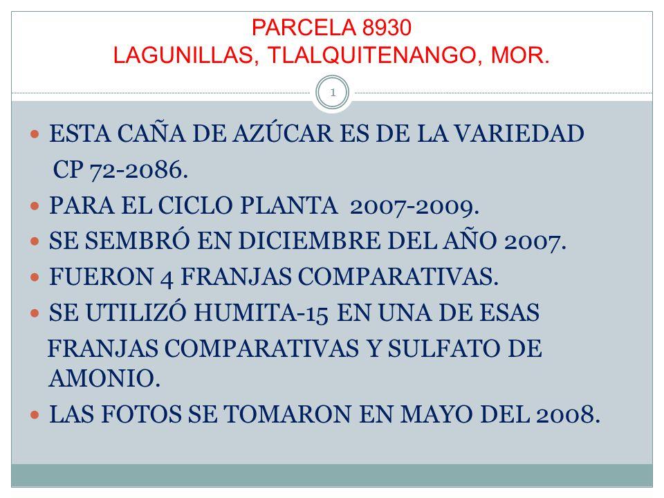 PARCELA 8930 LAGUNILLAS, TLALQUITENANGO, MOR. ESTA CAÑA DE AZÚCAR ES DE LA VARIEDAD CP 72-2086. PARA EL CICLO PLANTA 2007-2009. SE SEMBRÓ EN DICIEMBRE
