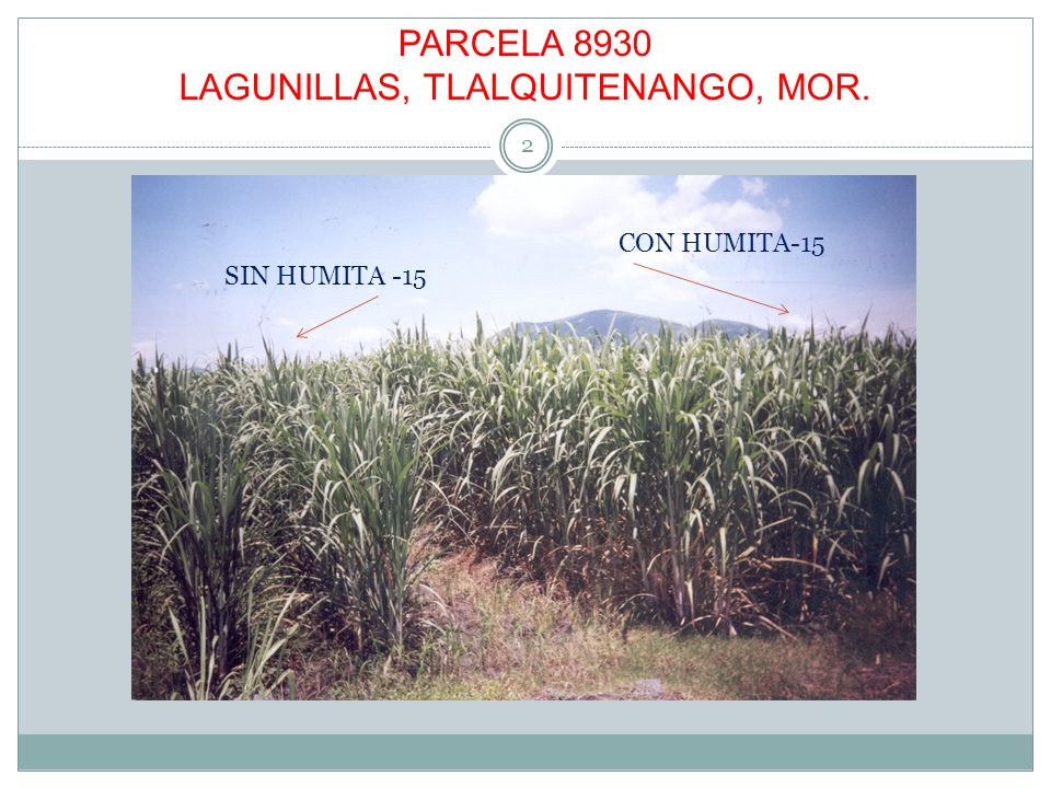 PARCELA 8930 LAGUNILLAS, TLALQUITENANGO, MOR. 2 SIN HUMITA -15 CON HUMITA-15