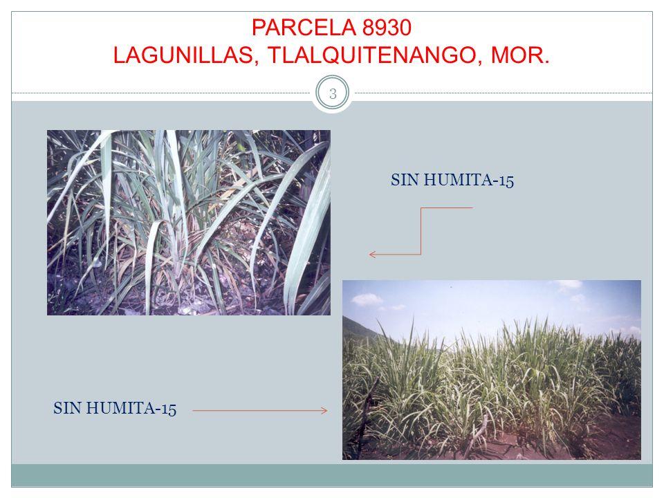 PARCELA 8930 LAGUNILLAS, TLALQUITENANGO, MOR. 3 SIN HUMITA-15