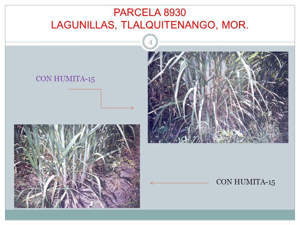 PARCELA 8930 LAGUNILLAS, TLALQUITENANGO, MOR. 4 CON HUMITA-15