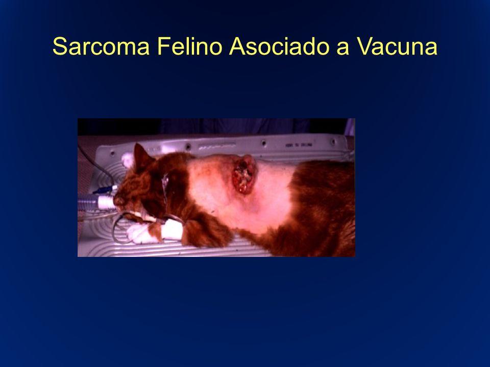 Sarcoma Felino Asociado a Vacuna
