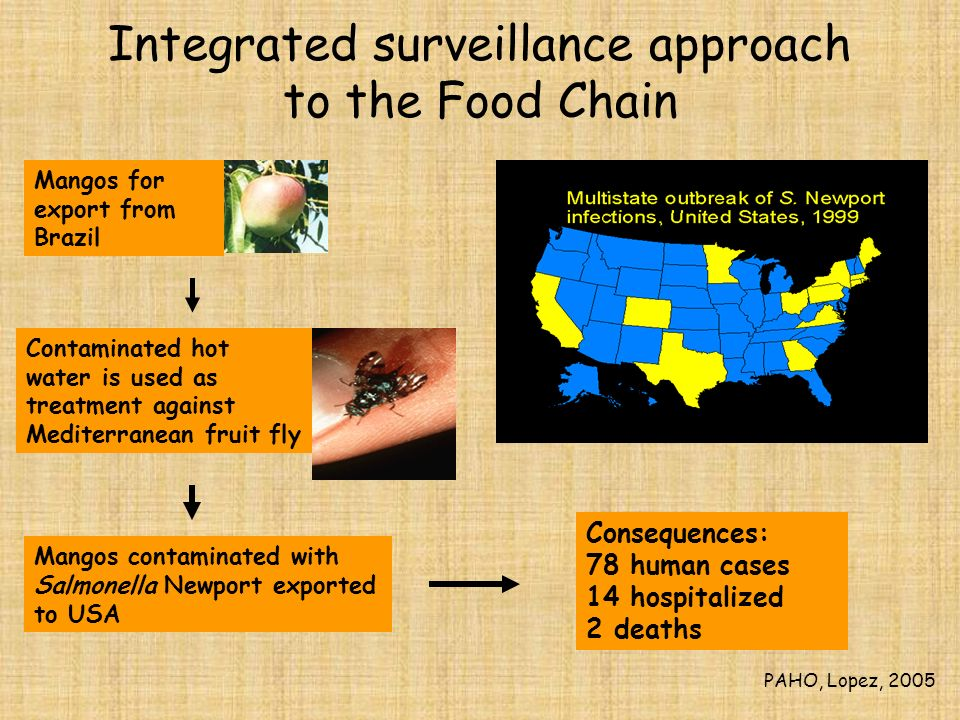 Integrated surveillance approach to the Food Chain Mangos for export from Brazil Contaminated hot water is used as treatment against Mediterranean fru