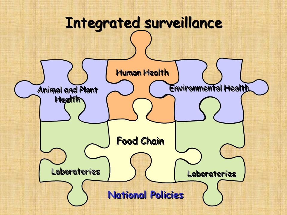 General level Networking to improve national capacities in surveillance and laboratory confirmation –Training –Standardization –Quality assurance –Scientific support