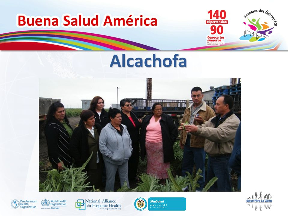 Buena Salud América Alcachofa