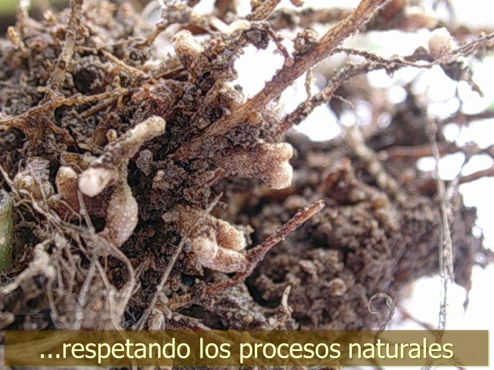 ...respetando los procesos naturales