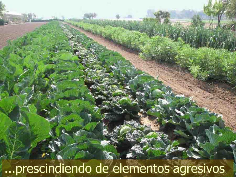 - ¡que la agroecología forme parte de los planes de enseñanza!,