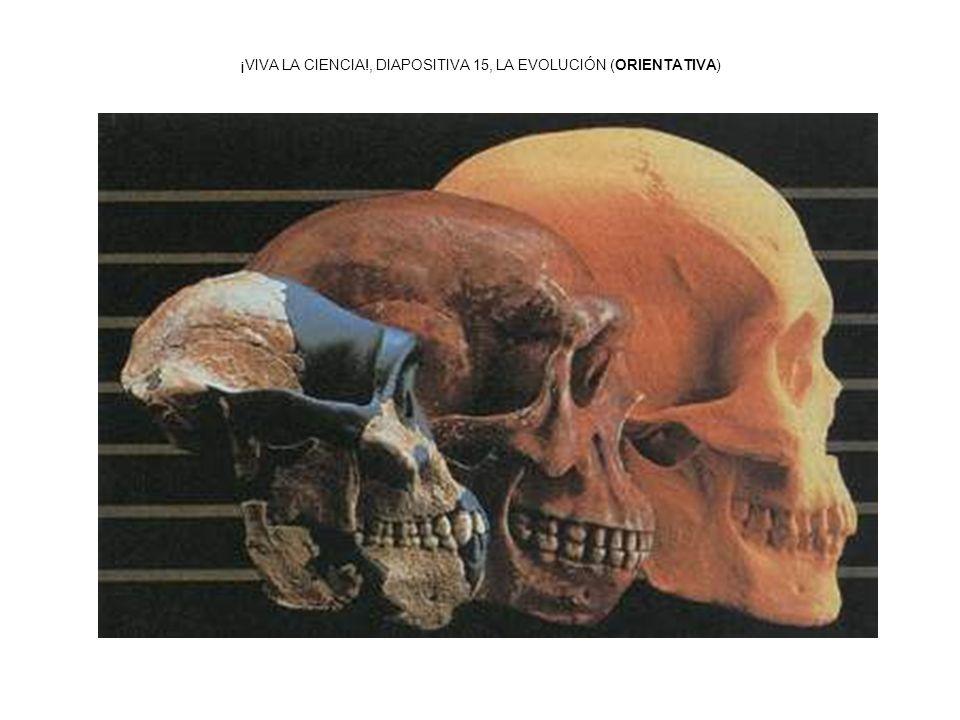 ¡VIVA LA CIENCIA!, DIAPOSITIVA 15, LA EVOLUCIÓN (ORIENTATIVA)