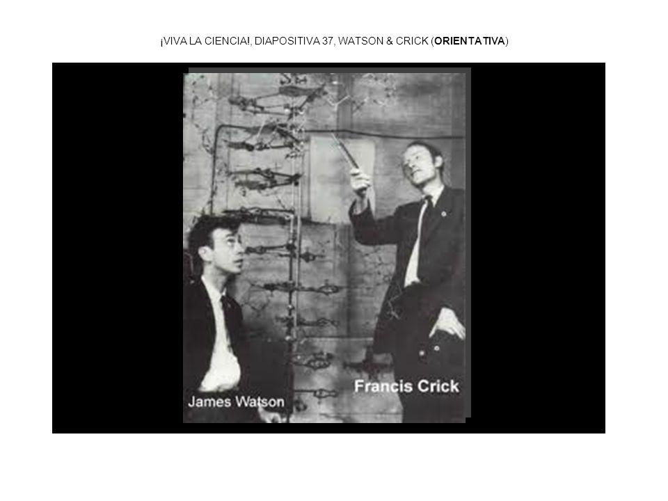 ¡VIVA LA CIENCIA!, DIAPOSITIVA 37, WATSON & CRICK (ORIENTATIVA)