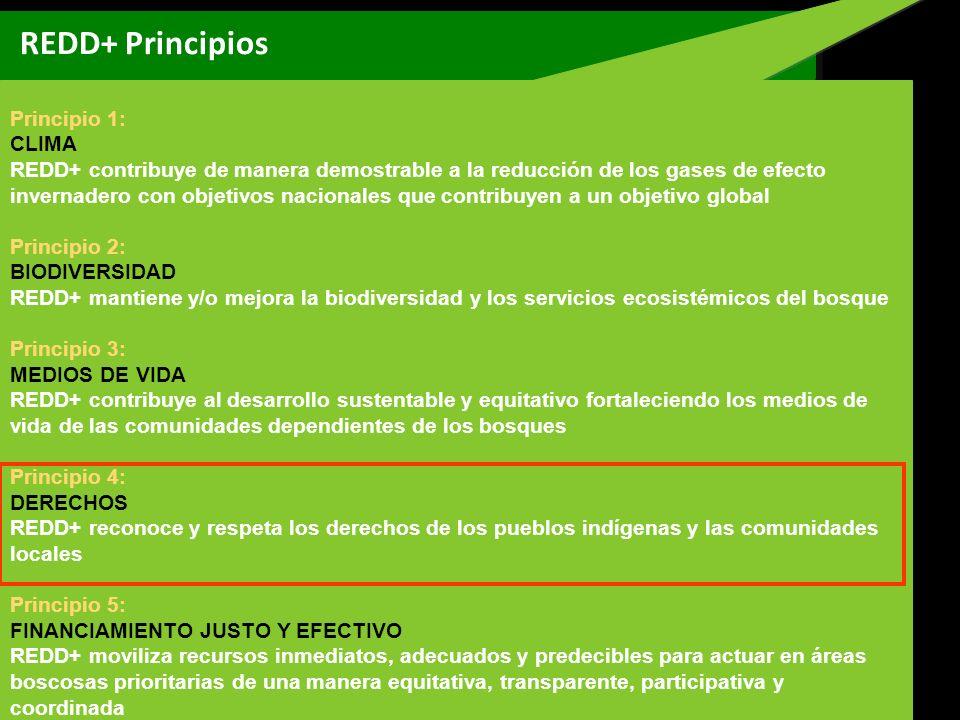 REDD+ Principios Principio 1: CLIMA REDD+ contribuye de manera demostrable a la reducción de los gases de efecto invernadero con objetivos nacionales