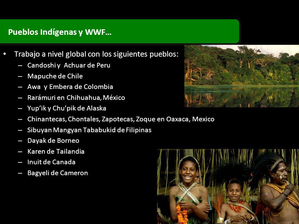 Trabajo a nivel global con los siguientes pueblos: – Candoshi y Achuar de Peru – Mapuche de Chile – Awa y Embera de Colombia – Rarámuri en Chihuahua,