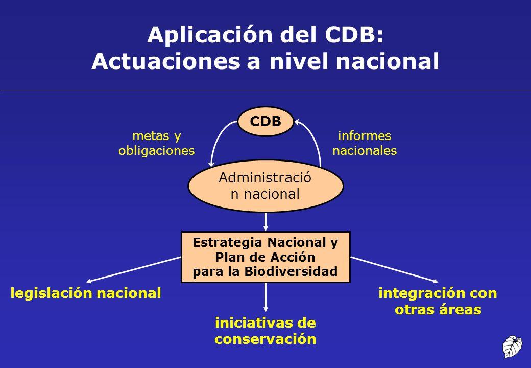 Aplicación del CDB: Actuaciones a nivel nacional CDB Administració n nacional legislación nacionalintegración con otras áreas Estrategia Nacional y Pl