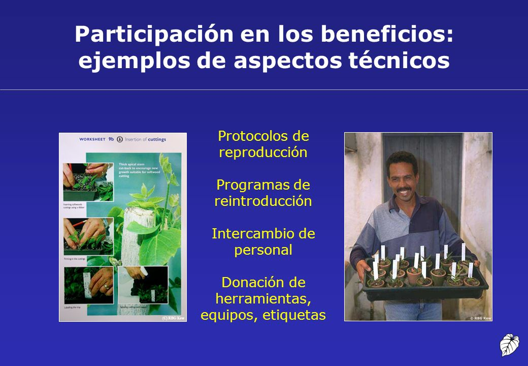 Participación en los beneficios: ejemplos de aspectos técnicos Protocolos de reproducción Programas de reintroducción Intercambio de personal Donación
