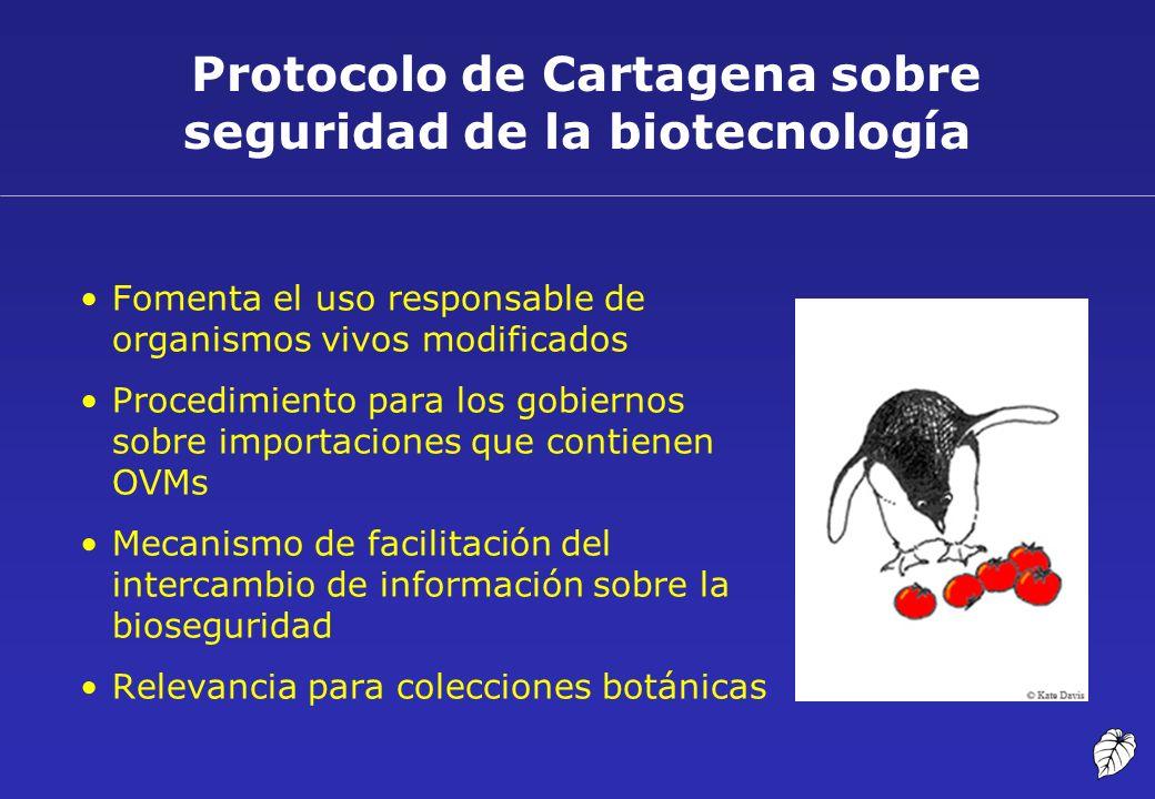 Protocolo de Cartagena sobre seguridad de la biotecnología Fomenta el uso responsable de organismos vivos modificados Procedimiento para los gobiernos