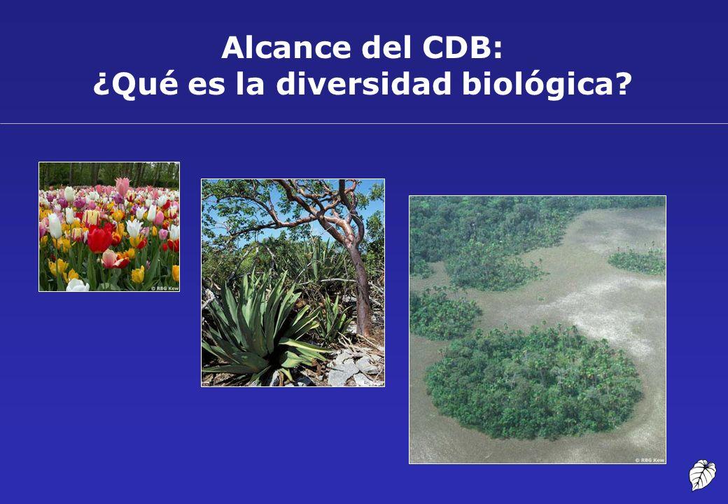 Alcance del CDB: ¿Qué es la diversidad biológica?