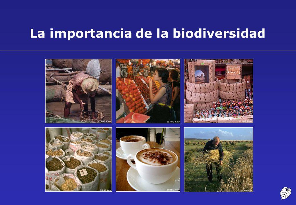Valor económico de la biodiversidad (1) Estimaciones de ventas anuales de algunos productos derivados de recursos genéticos Fuente: ten Kate K.