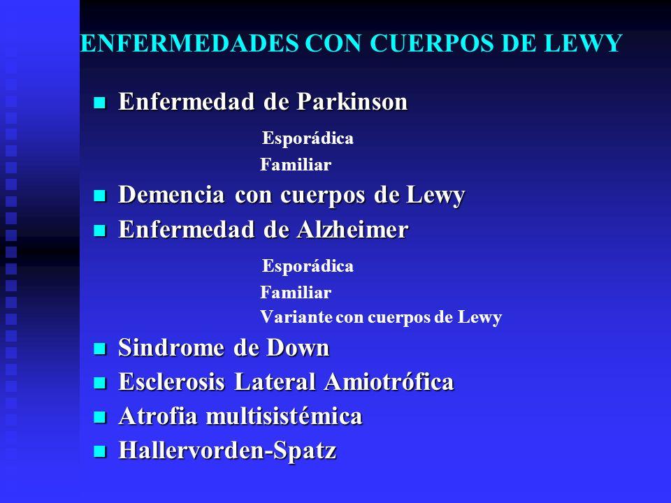 ENFERMEDADES CON CUERPOS DE LEWY Enfermedad de Parkinson Enfermedad de Parkinson Esporádica Familiar Demencia con cuerpos de Lewy Demencia con cuerpos