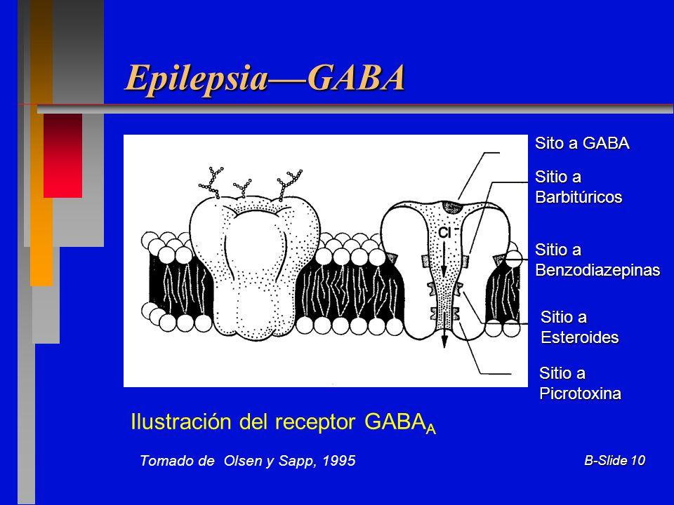 B-Slide 10 EpilepsiaGABA Ilustración del receptor GABA A Tomado de Olsen y Sapp, 1995 Sito a GABA Sitio a Barbitúricos Benzodiazepinas Esteroides Picr