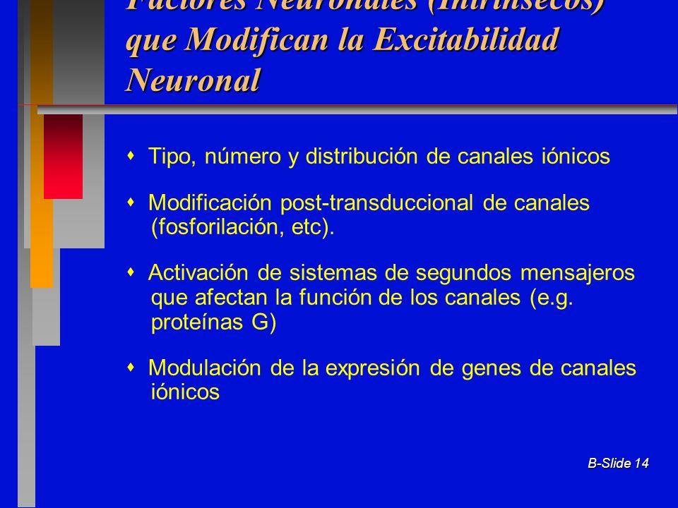 B-Slide 14 Factores Neuronales (Intrínsecos) que Modifican la Excitabilidad Neuronal Tipo, número y distribución de canales iónicos Modificación post-