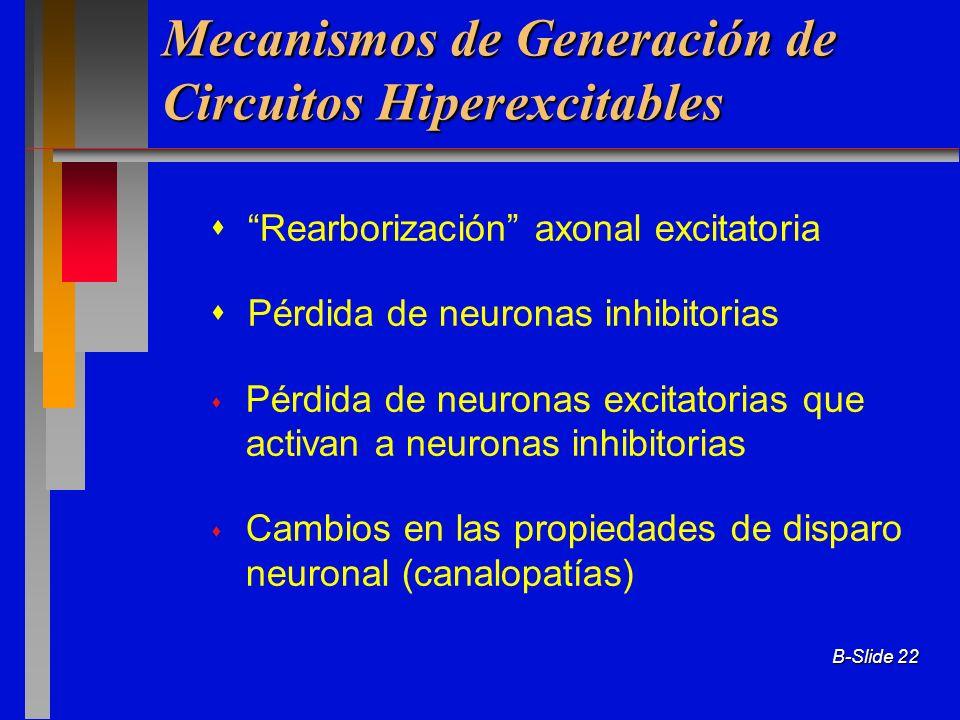 B-Slide 22 Mecanismos de Generación de Circuitos Hiperexcitables Rearborización axonal excitatoria Pérdida de neuronas inhibitorias Pérdida de neurona