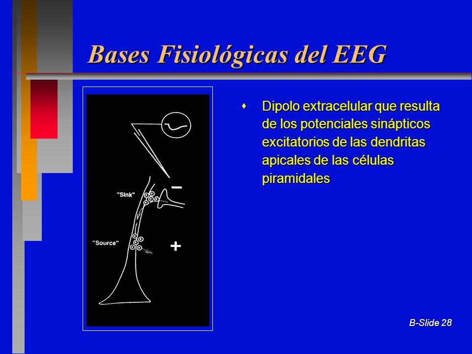 B-Slide 28 Bases Fisiológicas del EEG Dipolo extracelular que resulta de los potenciales sinápticos excitatorios de las dendritas apicales de las célu