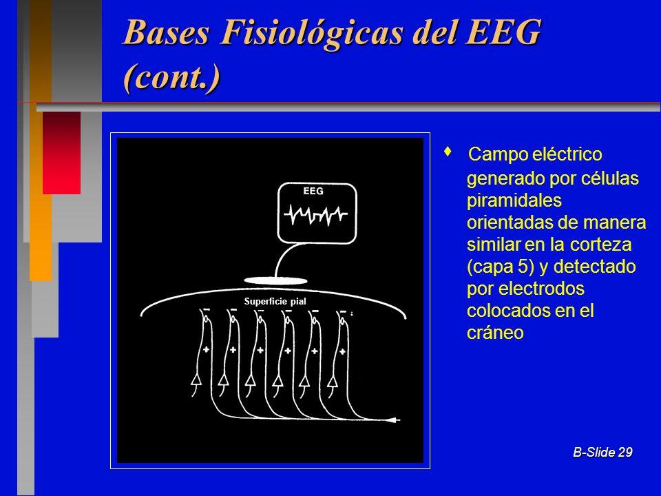 B-Slide 29 Bases Fisiológicas del EEG (cont.) Campo eléctrico generado por células piramidales orientadas de manera similar en la corteza (capa 5) y d