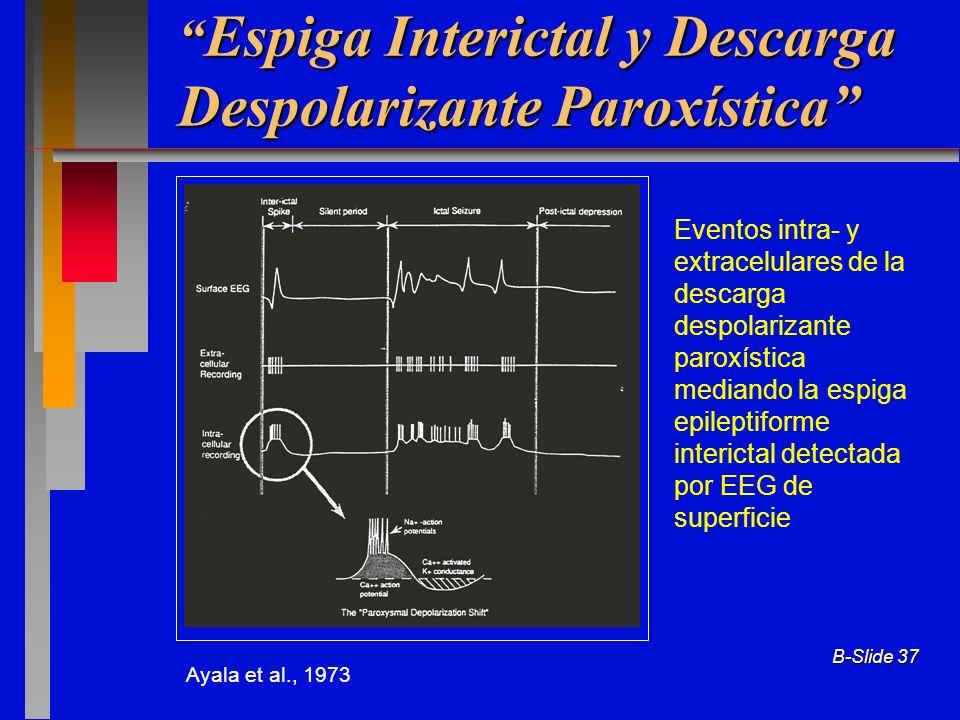 B-Slide 37 Espiga Interictal y Descarga Despolarizante Paroxística Espiga Interictal y Descarga Despolarizante Paroxística Eventos intra- y extracelul