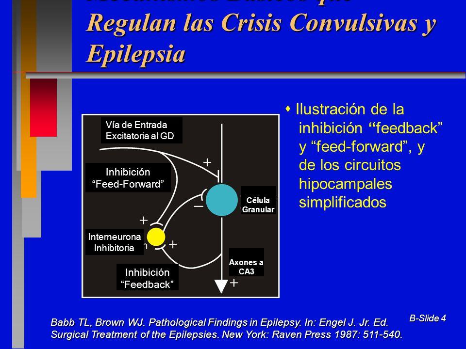 B-Slide 4 Mecanismos Básicos que Regulan las Crisis Convulsivas y Epilepsia Ilustración de la inhibición feedback y feed-forward, y de los circuitos h