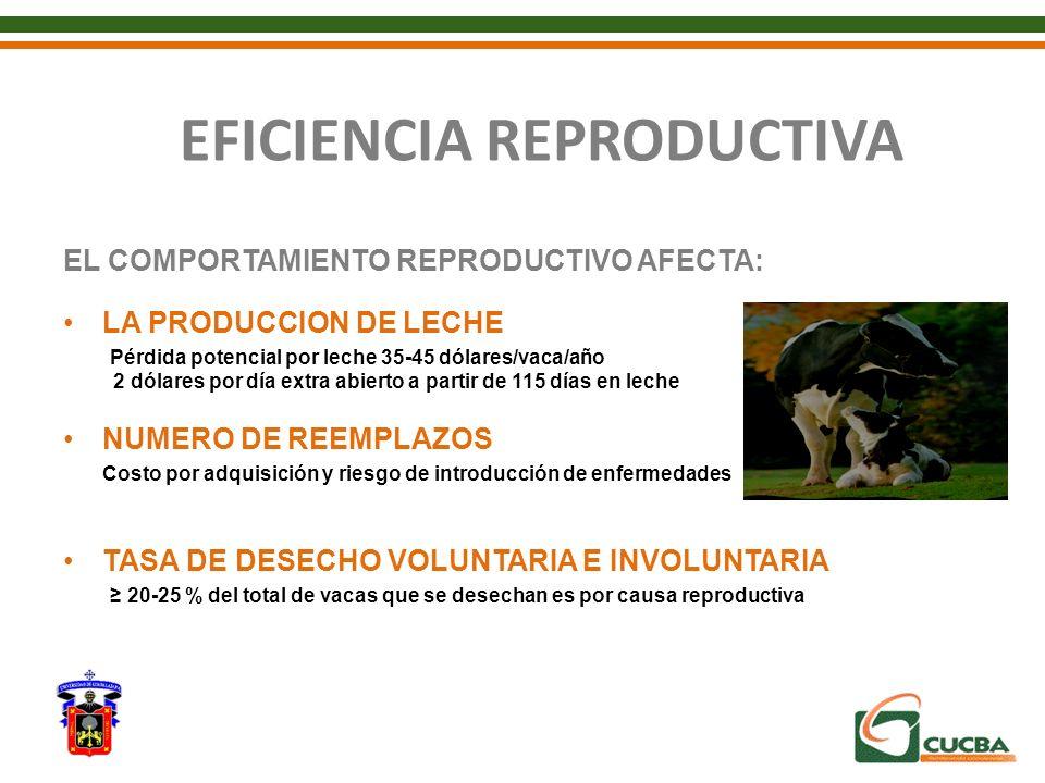 EFICIENCIA REPRODUCTIVA EL COMPORTAMIENTO REPRODUCTIVO AFECTA: LA PRODUCCION DE LECHE Pérdida potencial por leche 35-45 dólares/vaca/año 2 dólares por