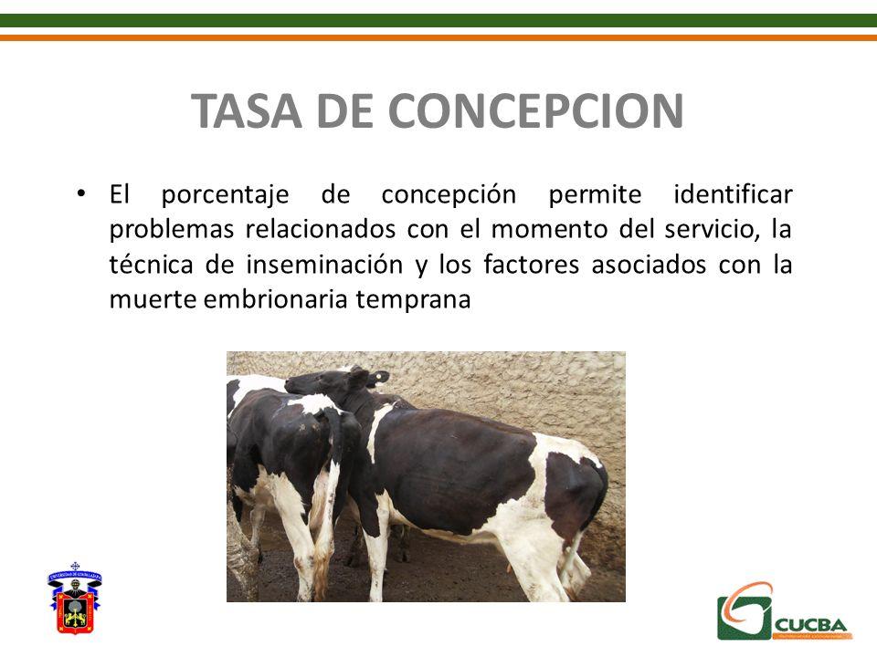TASA DE CONCEPCION El porcentaje de concepción permite identificar problemas relacionados con el momento del servicio, la técnica de inseminación y lo