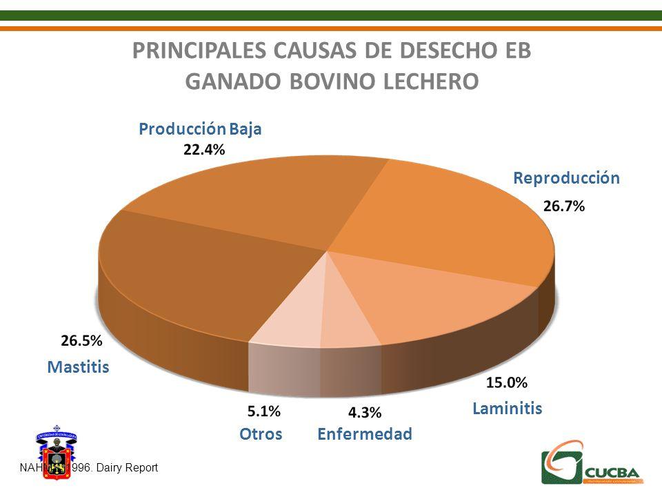 PRINCIPALES CAUSAS DE DESECHO EB GANADO BOVINO LECHERO Mastitis Reproducción Producción Baja Laminitis EnfermedadOtros NAHMS, 1996. Dairy Report