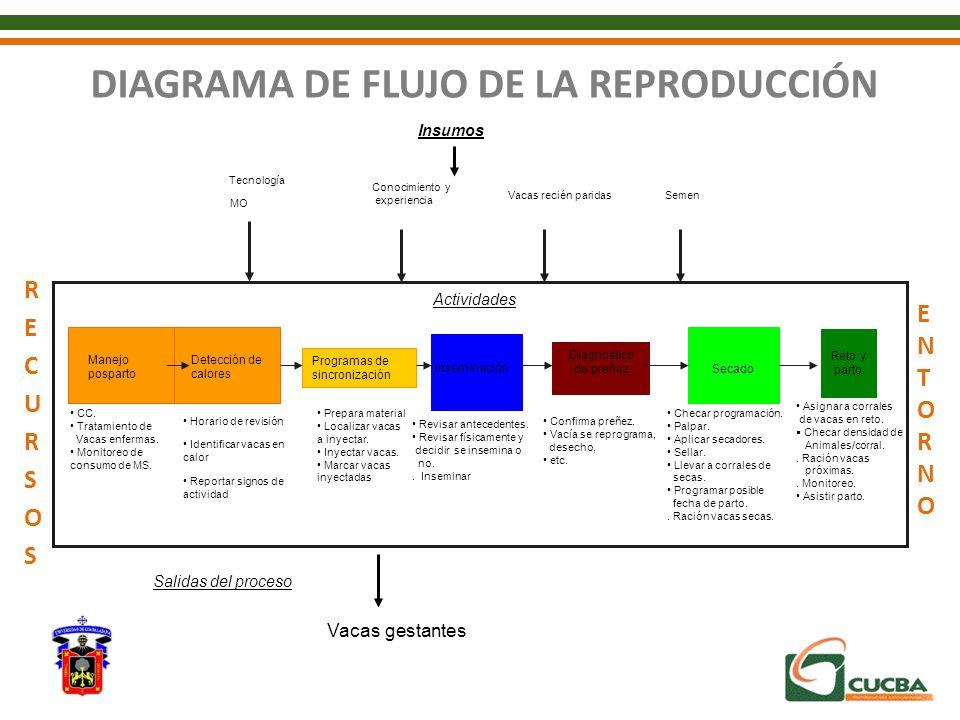 DIAGRAMA DE FLUJO DE LA REPRODUCCIÓN Detección de calores Programas de sincronización Inseminación Diagnostico de preñez Secado Reto y parto Horario d