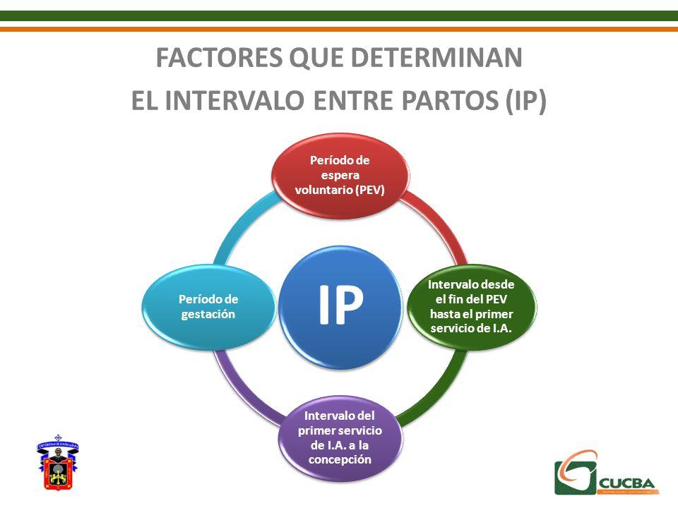 FACTORES QUE DETERMINAN EL INTERVALO ENTRE PARTOS (IP) IP Período de espera voluntario (PEV) Intervalo desde el fin del PEV hasta el primer servicio d