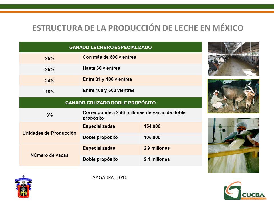 ESTRUCTURA DE LA PRODUCCIÓN DE LECHE EN MÉXICO GANADO LECHERO ESPECIALIZADO 25% Con más de 600 vientres 25% Hasta 30 vientres 24% Entre 31 y 100 vient