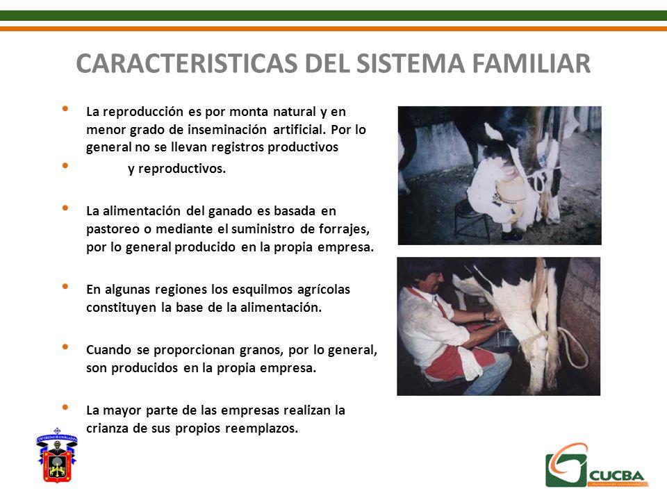 CARACTERISTICAS DEL SISTEMA FAMILIAR La reproducción es por monta natural y en menor grado de inseminación artificial. Por lo general no se llevan reg