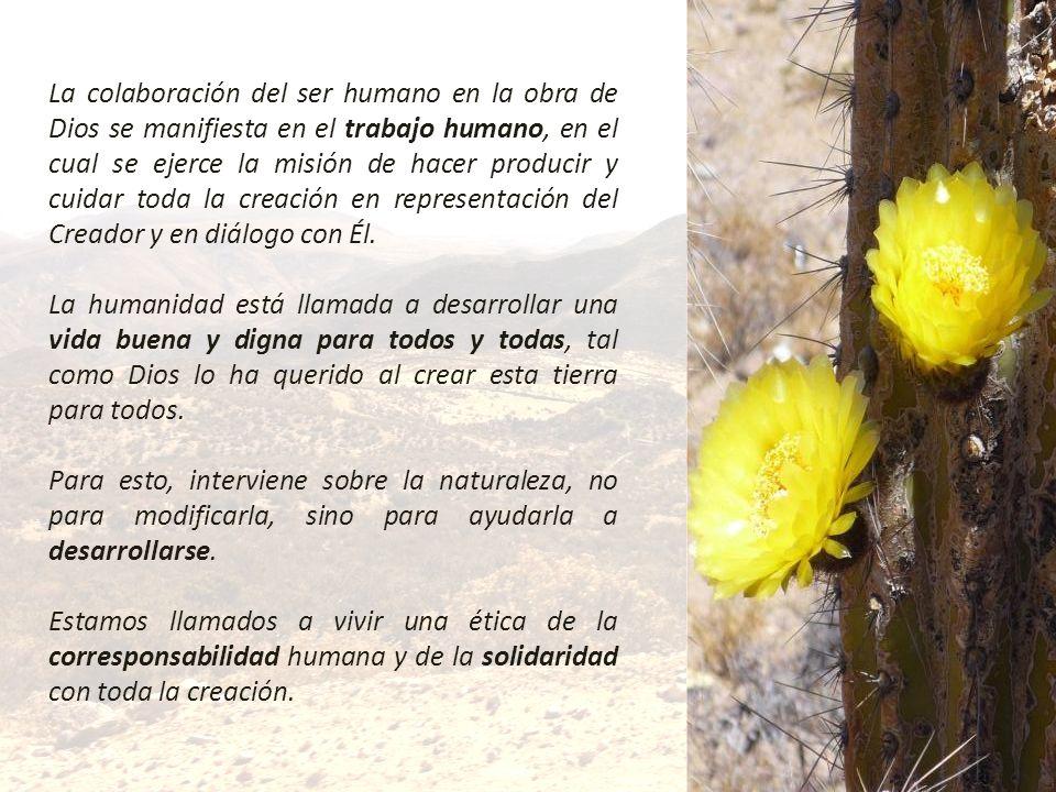 La colaboración del ser humano en la obra de Dios se manifiesta en el trabajo humano, en el cual se ejerce la misión de hacer producir y cuidar toda l