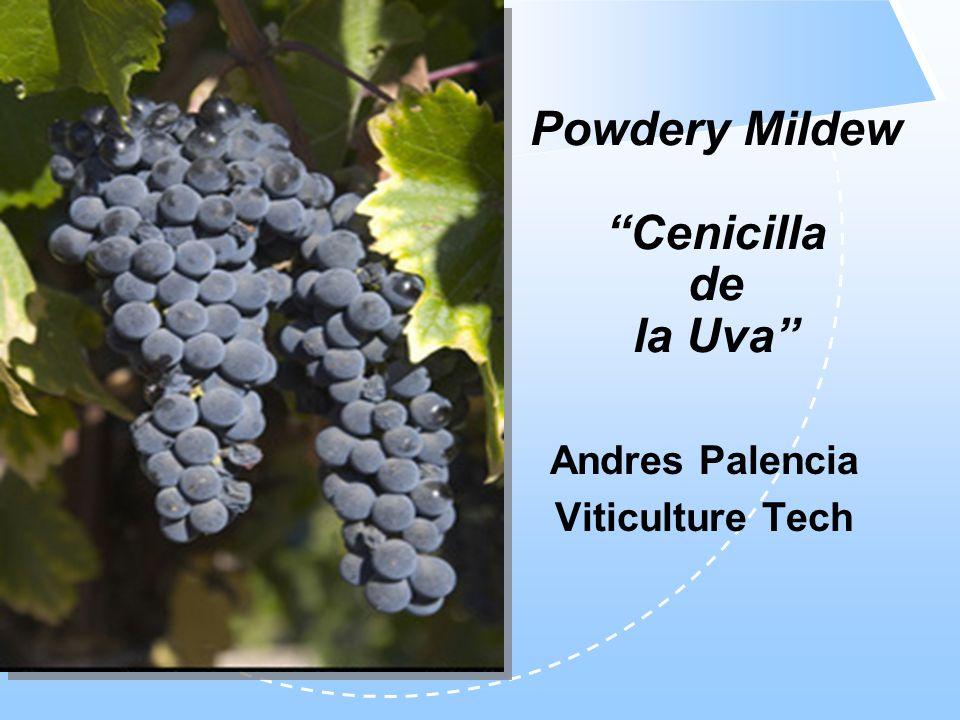 Powdery Mildew Cenicilla de la Uva Andres Palencia Viticulture Tech