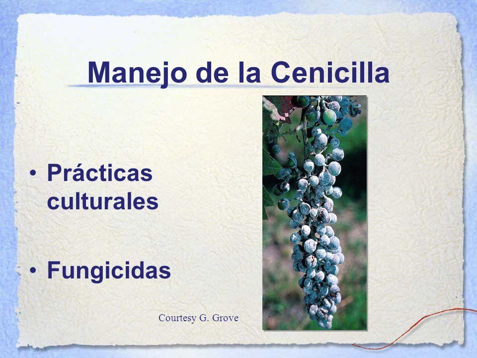 Manejo de la Cenicilla Prácticas culturales Fungicidas Courtesy G. Grove