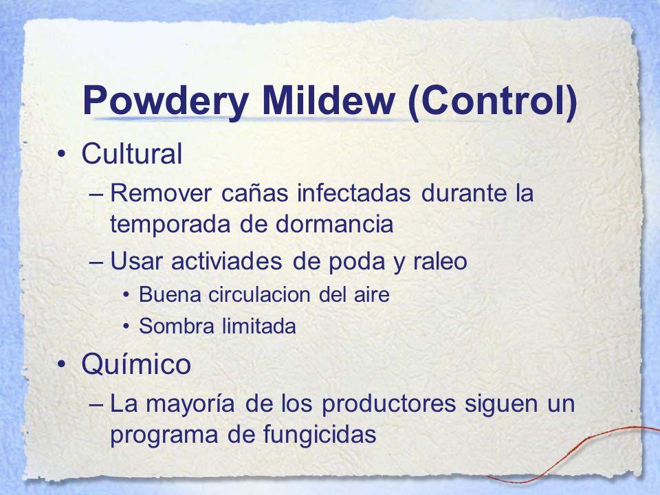 Powdery Mildew (Control) Cultural –Remover cañas infectadas durante la temporada de dormancia –Usar activiades de poda y raleo Buena circulacion del a