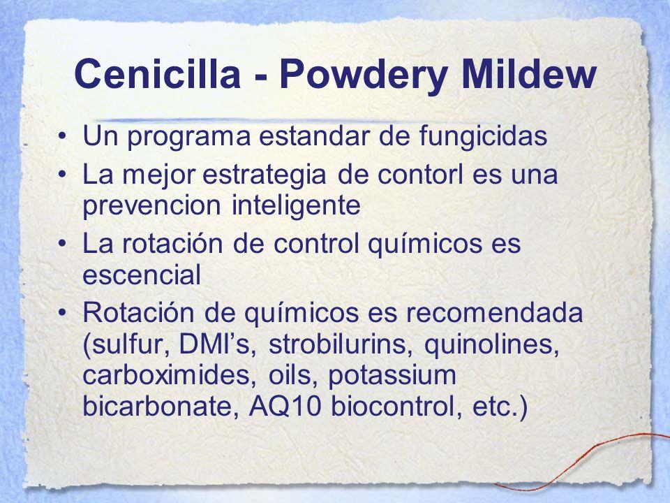 Cenicilla - Powdery Mildew Un programa estandar de fungicidas La mejor estrategia de contorl es una prevencion inteligente La rotación de control quím