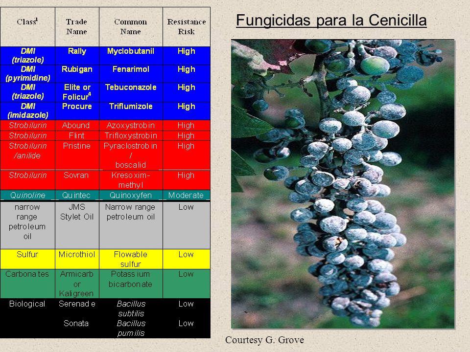 Fungicidas para la Cenicilla Courtesy G. Grove