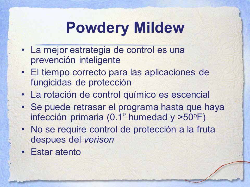 Powdery Mildew La mejor estrategia de control es una prevención inteligente El tiempo correcto para las aplicaciones de fungicidas de protección La ro