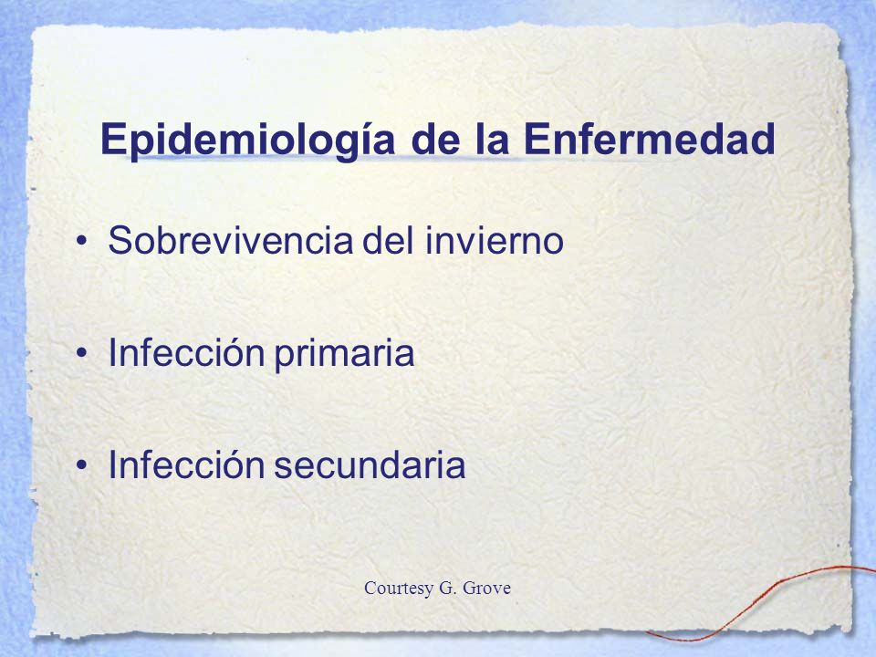 Epidemiología de la Enfermedad Sobrevivencia del invierno Infección primaria Infección secundaria Courtesy G. Grove
